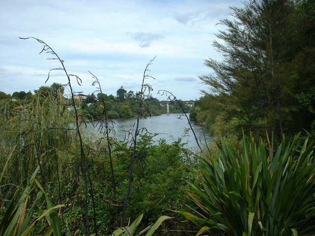 Waikato River (Fairfield)